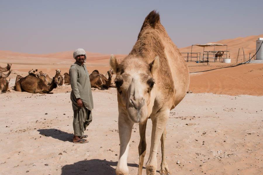 Auf einer Kamelfarm in der Wüste