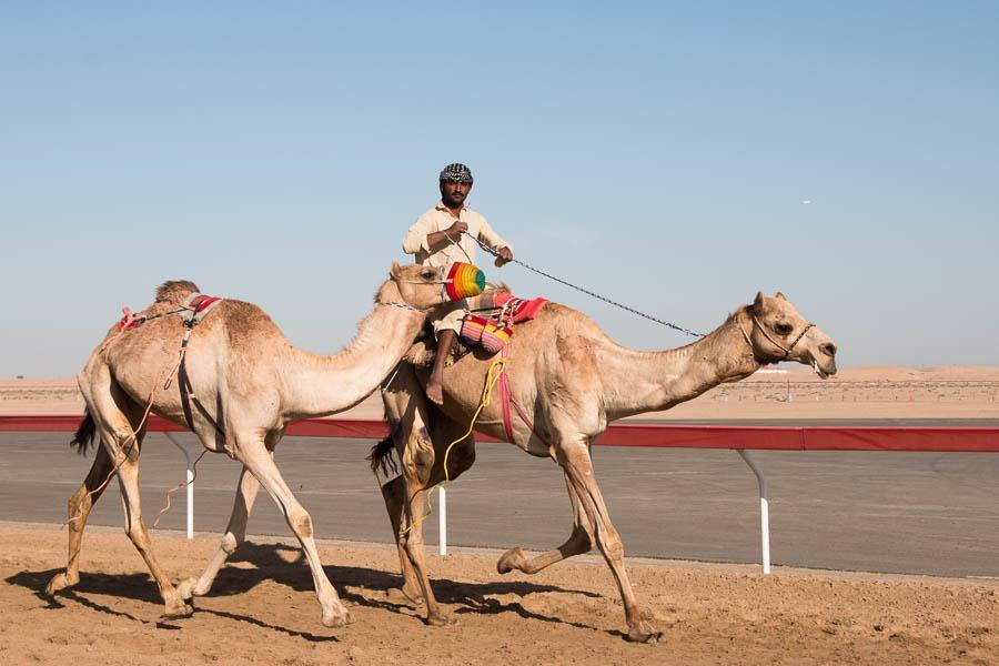 Kamelrenntraining nahe Al Ain