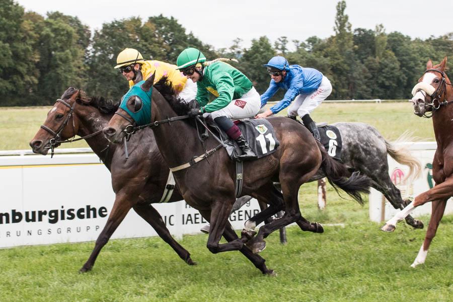 Nero de Avolo (10), Lady O'Connor (11) und Kölner Kimberley (6) sind an der Spitze, aber der spätere Sieger Amour Magique (2) holt bereits auf.